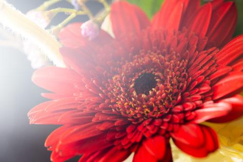 flowerfthg1969_tp_v